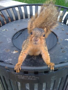 squirrel_trash